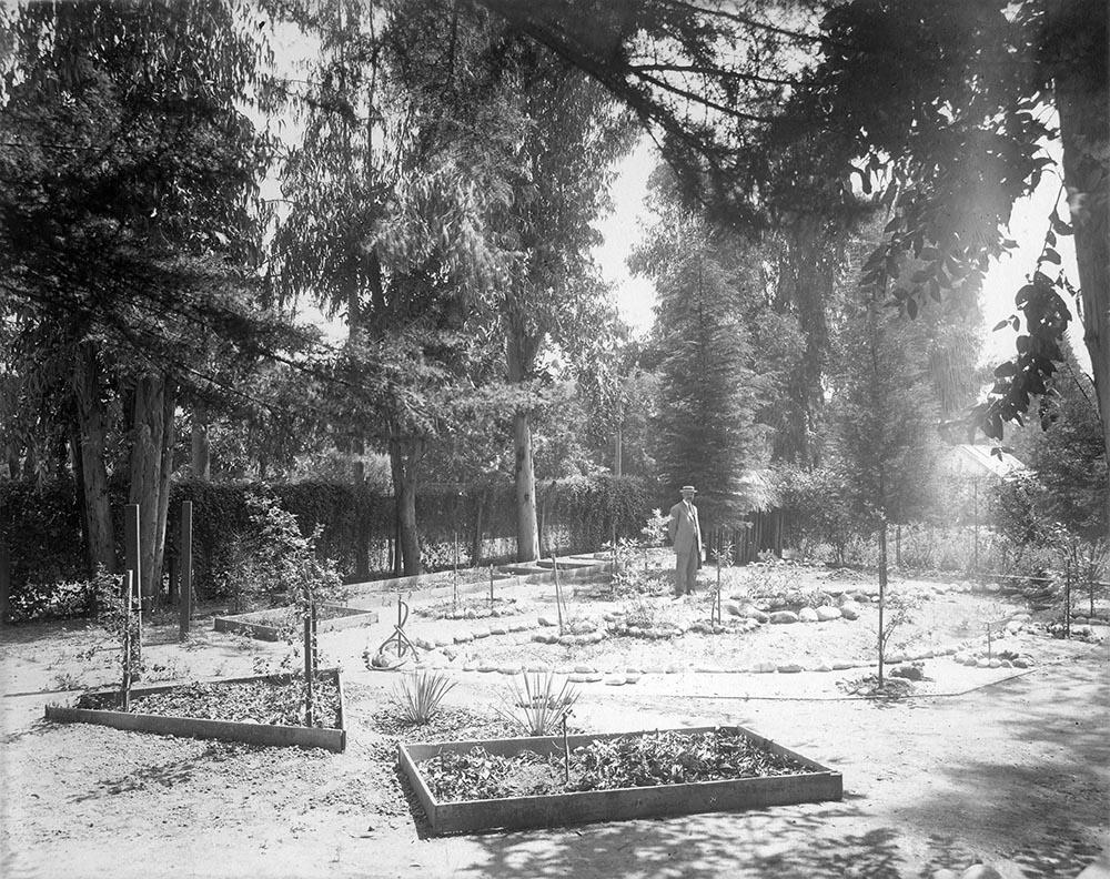 Adalbert Fenyes in Insectorium