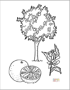Orange Tree coloring page thumbnail