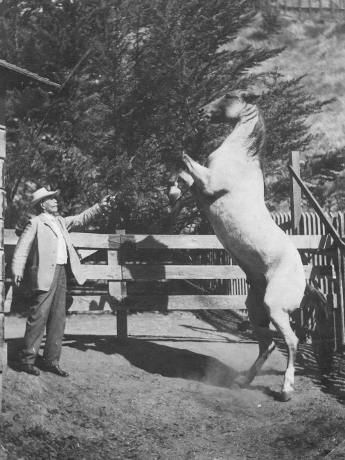 Peter Gano beside his trusted steed, Mercury. The stallion had once been part of a circus, but retired due to failing eyesight. Courtesy of Catalina Island Museum.