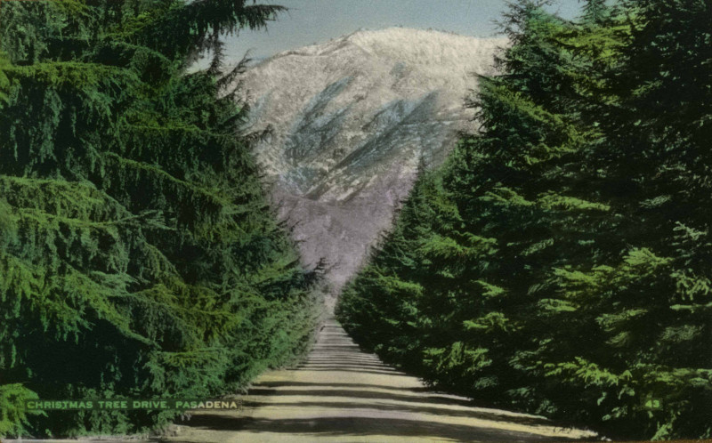 Christmas Tree Lane during the day, n.d. (Postcard Collection)