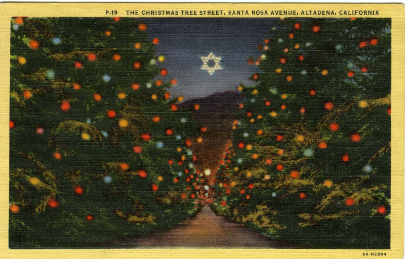 Christmas Tree Lane at night(Postcard Collection)