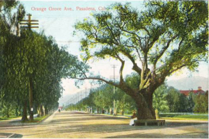 A postcard view looking north from the live oak tree at the intersection of California and Orange Grove.