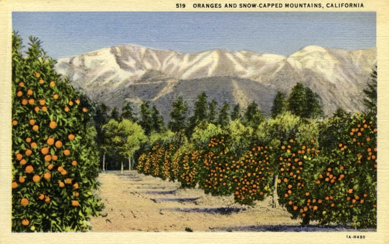 oranges and mountains postcard