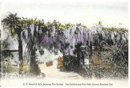 A postcard view of a wisteria arbor at the Japanese tea garden.